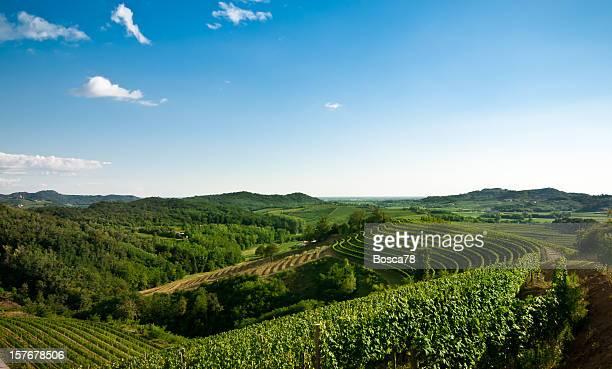 Vista panoramica di azienda vinicola con cielo sereno