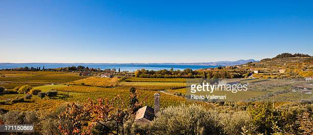 Panoramic View on Autumnal Vineyards