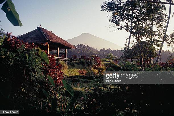 Panoramic views over the rice fields of Tetebatu to Mount Rinjani the tallest mountain in Lombok On top of the mountain is an enormous crater filled...