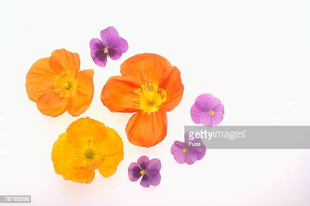 Pansy and Poppy Flowers