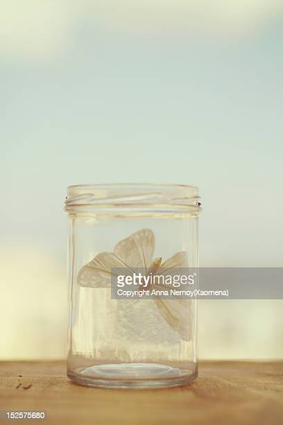 Paper butterfly in glass bowl