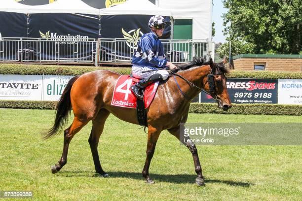 Paper Chaser ridden by Ben Allen returns after winning the Evergreen Turf Plate at Mornington Racecourse on November 13 2017 in Mornington Australia