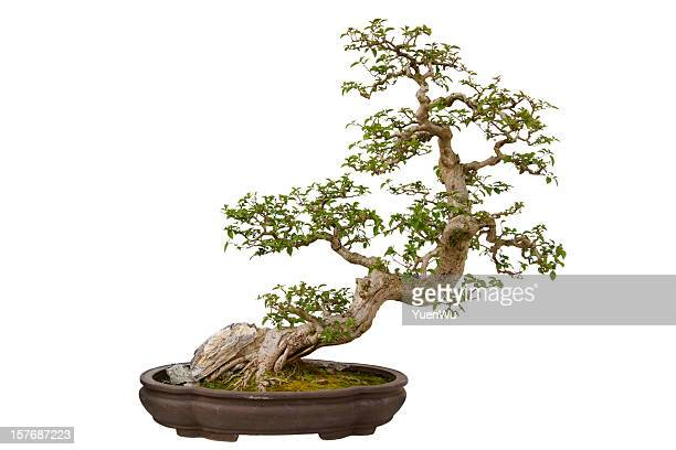 Paper flower bonsai tree isolated on a white background