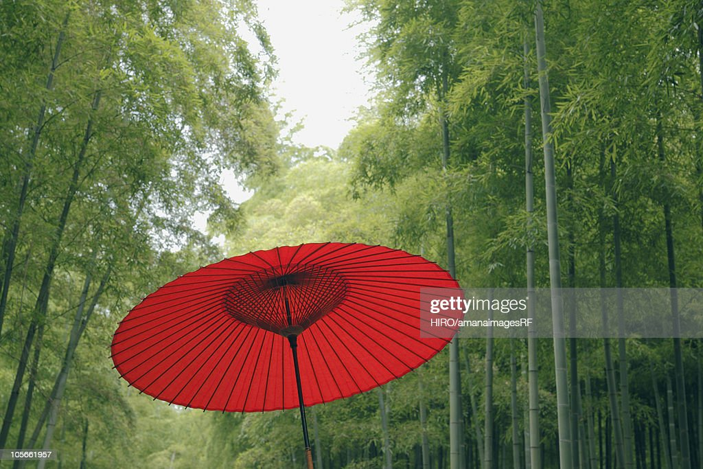 Paper Umbrella in a Bamboo Grove