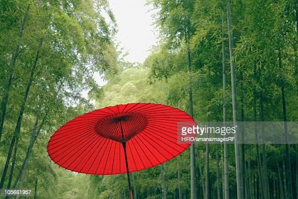 Paper Umbrella in a Bamboo Grove