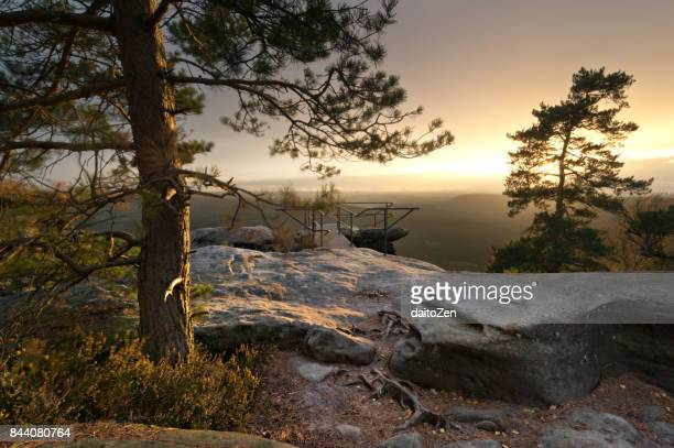 Papststein hiking area with Pine trees before sunset, Saxon Switzerland National Park, Germany