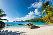 Paradise island. Sandy beach with palm and turquoise sea.  Summer vacation and travel concept.
