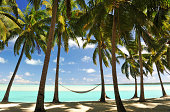 Palm fringed tropical beach with hammock  in semi- silhouette