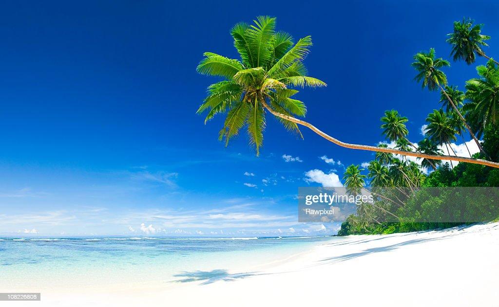 Paradise : Stock Photo