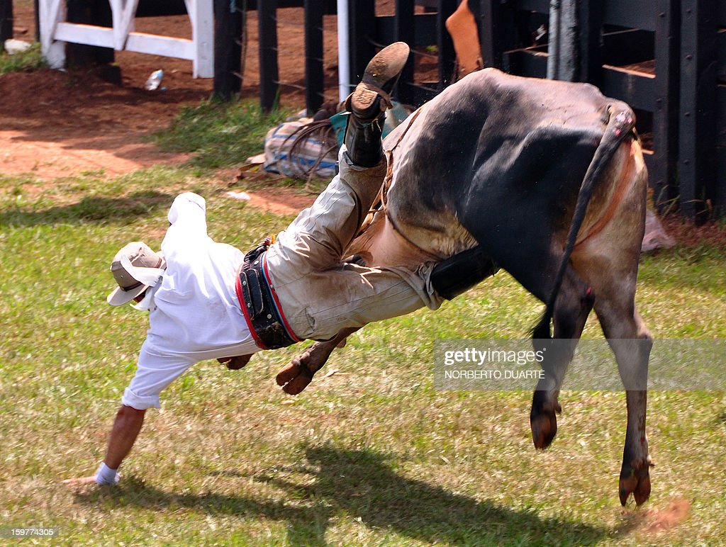 A Paraguayan gaucho falls while riding a zebu bull during a rodeo on January 20 2013 within the Misiones Traditional Festival held yearly in Santiago...