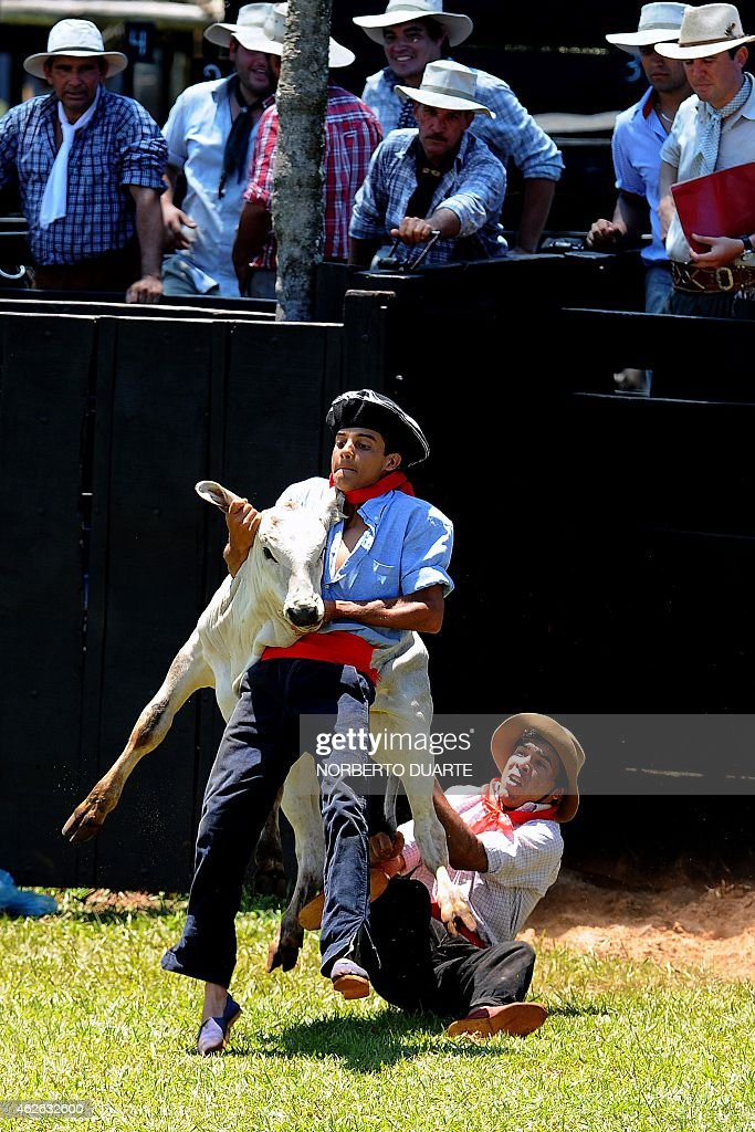 A Paraguayan gaucho grab a calf on February 1 2015 during the Misiones Traditional Festival held yearly in Santiago Misiones some 270 km south of...
