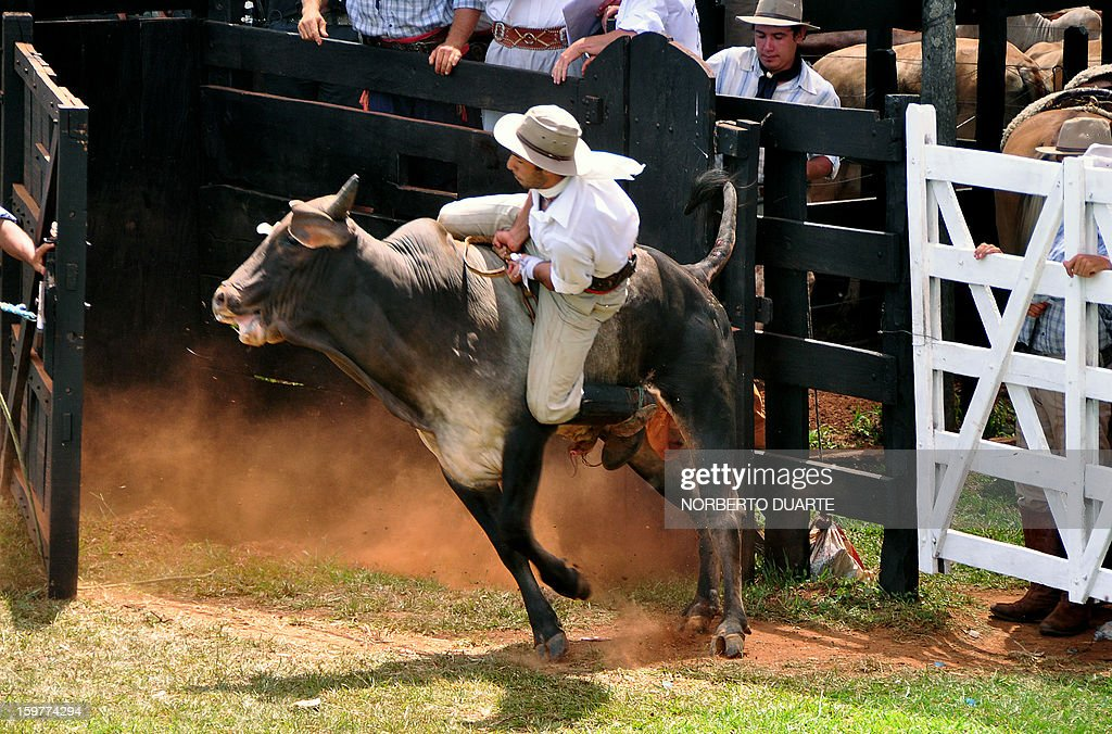 A Paraguayan gaucho rides a bull during a rodeo on January 20 2013 within the Misiones Traditional Festival held yearly in Santiago Misiones some 270...