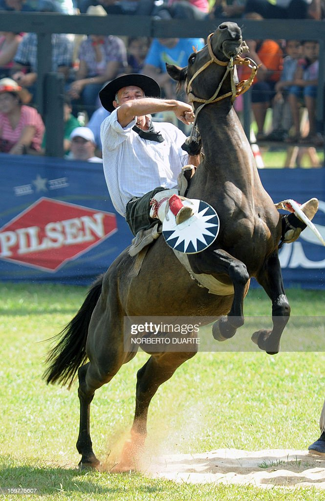 A Paraguayan gaucho rides a colt during a rodeo on January 20 2013 within the Misiones Traditional Festival held yearly in Santiago Misiones some 270...