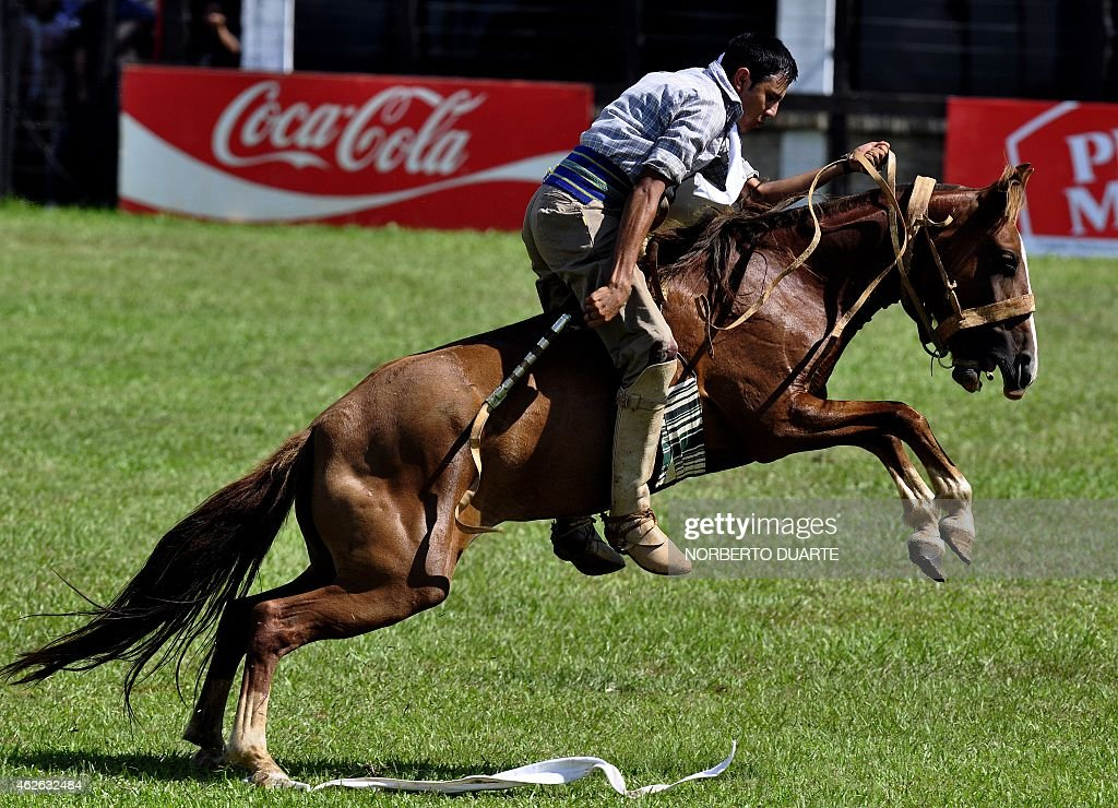 A Paraguayan gaucho rides a colt on February 1 2015 during the Misiones Traditional Festival held yearly in Santiago Misiones some 270 km south of...