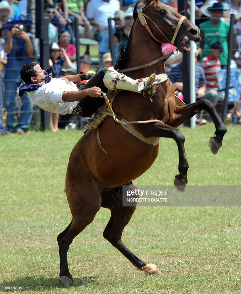 A Paraguayan gaucho rides a colt on January 20 2013 during the MisionesTraditional Festival held yearly in Santiago Misiones some 270 km south of...