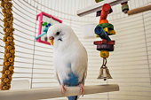 Parakeet in cage