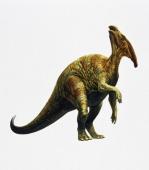 Parasaurolophus sp Hadrosauridae Late Cretaceous Artwork by John Francis