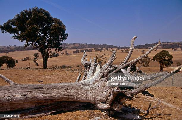 Parched Landscape - drought on a farm's water supply, Gunning, New South Wales, Australia