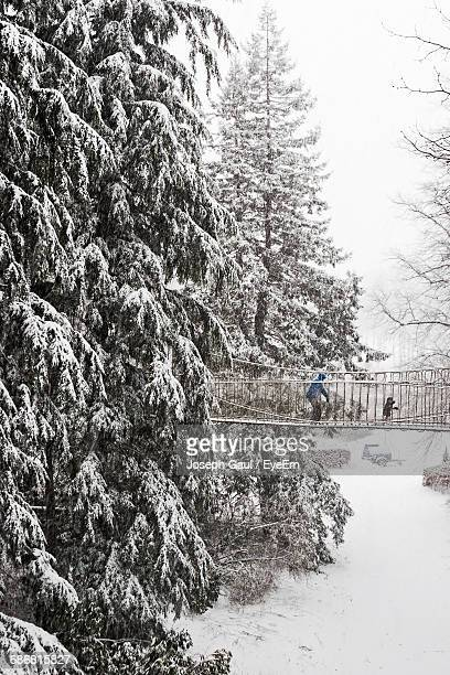 Parent And Child Walking On Bridge By Snow Covered Trees