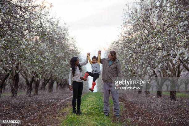 Parents playing with baby daughter on almond trees field in springtime.