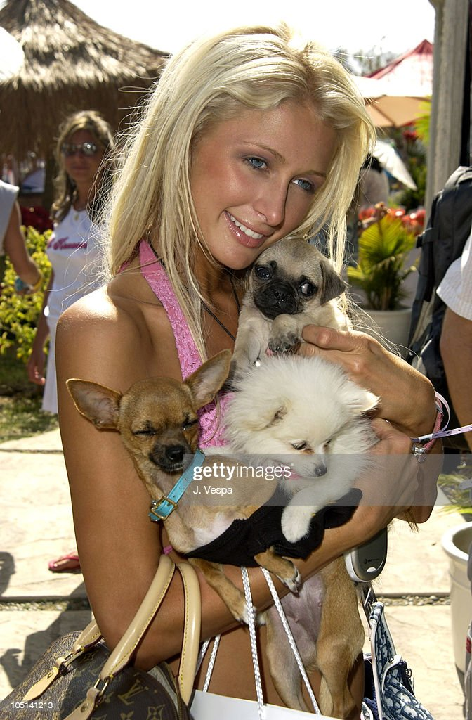 <a gi-track='captionPersonalityLinkClicked' href=/galleries/search?phrase=Paris+Hilton&family=editorial&specificpeople=171761 ng-click='$event.stopPropagation()'>Paris Hilton</a> during Cabana Pre-MTV Movie Awards Beauty Buffet - Day Two at Private Residence in Hollywood, California, United States.