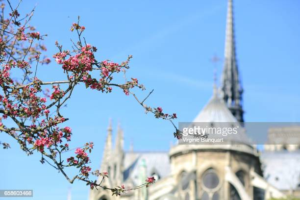 Paris, Notre-Dame with flowers in the foreground. 27 March 2017