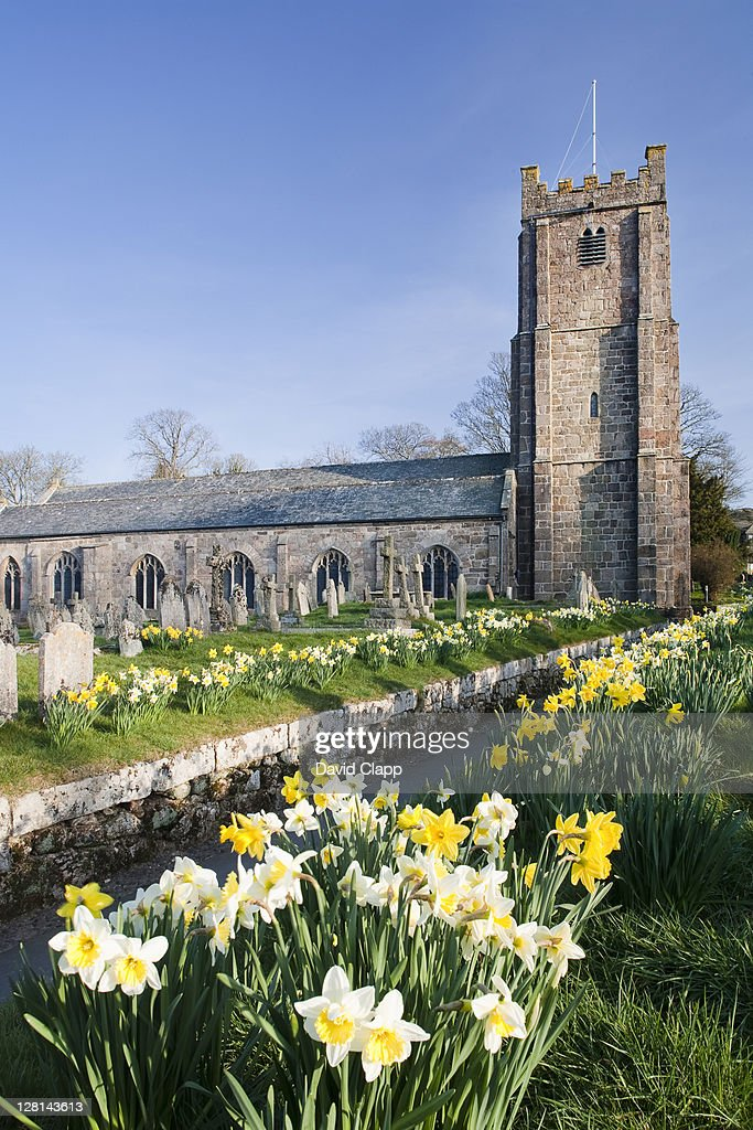 Parish Curch of St Michael the Archangel in spring time, with rows of daffofils leading to the entrance, Chagford, Dartmoor, Devon, England, UK : Stock Photo