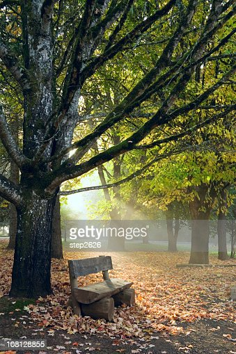 Park bench in autumn with morning sun rays passing through