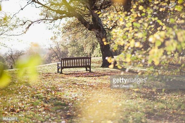 Park bench in clearing in autumn