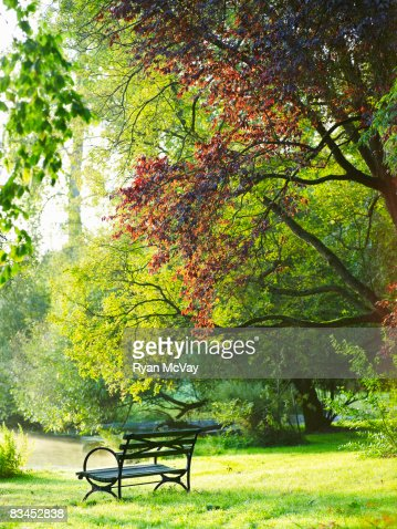 Park bench in park. : Stock Photo
