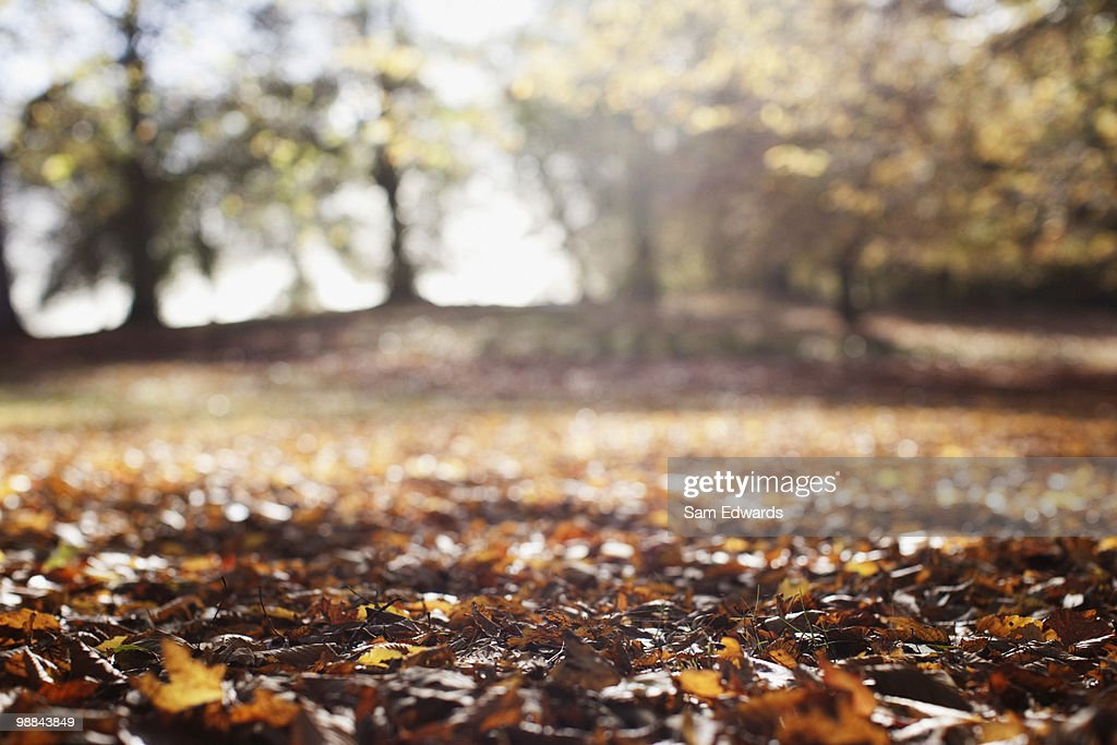 Park clearing in autumn : Stock Photo