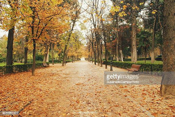Park del Buen Retiro in autumn, Madrid, Spain