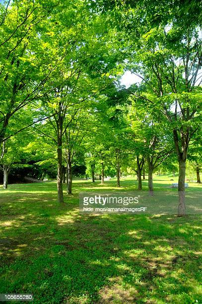Park Filled With Lush Green Trees. Osaka Prefecture, Japan