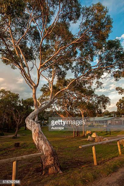 A park in Coles Bay Freycinet Peninsula Tasmania Australia