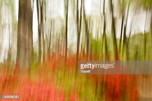 Park in spring, motion blur