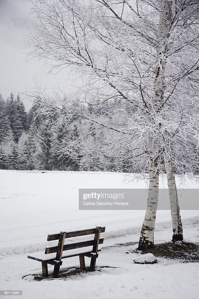 Park in winter : Stock Photo