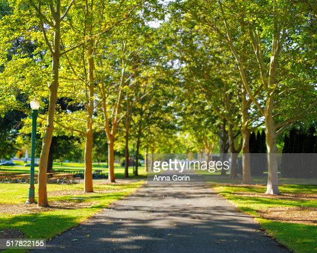 Park lane lined with trees in Boise, Idaho