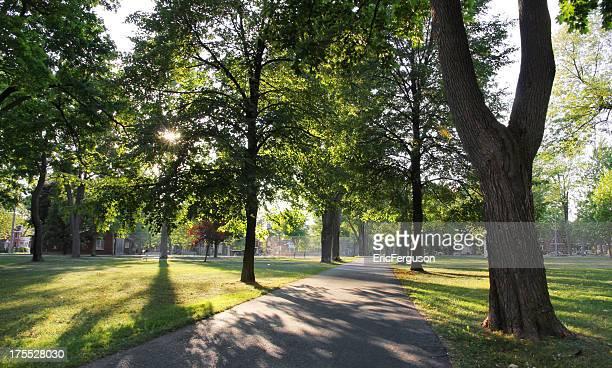 Weg im Park und Sonnenlicht