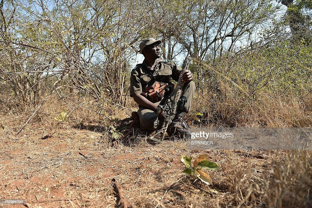 Park ranger Stephen Midzi patrols a section of Kruger National Park, in northern South Africa, scouting for possible poachers on July 31, 2014. The game ranger with a rifle slung across his shoulders follows a bush trail through South Africa's famed Kruger national park, alert to the slightest sound or movement. He faces threats not only from lions and elephants but from human beings -- heavily-armed poachers who stalk the park's wilderness day and night.