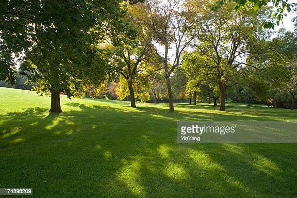 Park with Tree and Grass Lawn Landscaping in Minneapolis, Minnesota