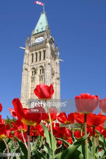 Parliament Tulips - 01