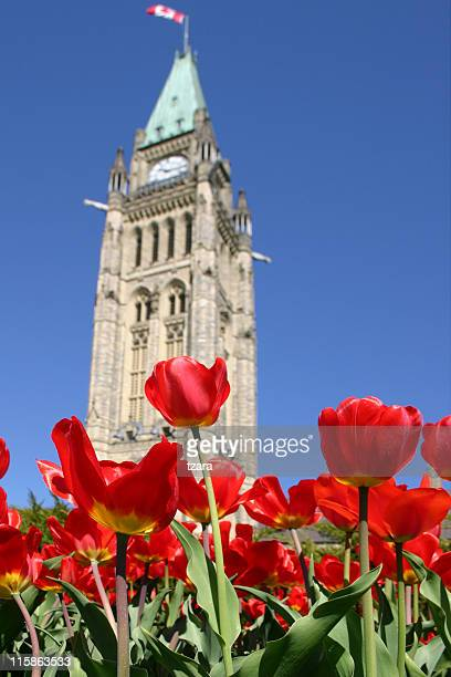 Parliament Tulips - 01