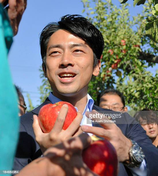 Parliamentary Secretary for Reconstruction Shinjiro Koizumi inspects an apple farmer who is suffering harmful rumour of the crippled nuclear power...