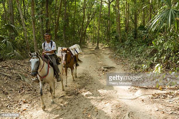 Parque Nacional Natural Tayrona Magdalena State Colombia August 20 2015 A man ride his horses with food in the forest Tayrona National Natural Park...