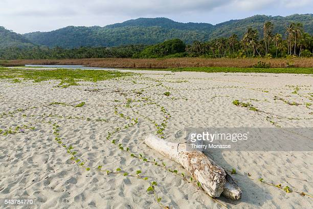 Parque Nacional Natural Tayrona Magdalena State Colombia August 20 2015 Tayrona National Natural Park is a protected area in the Colombian northern...
