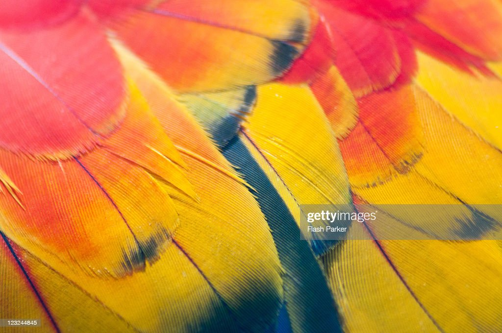 Parrot Feathers : Stock Photo