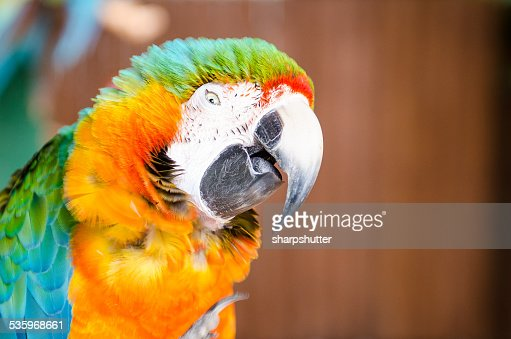 Parrot making a silly expression : Stock Photo