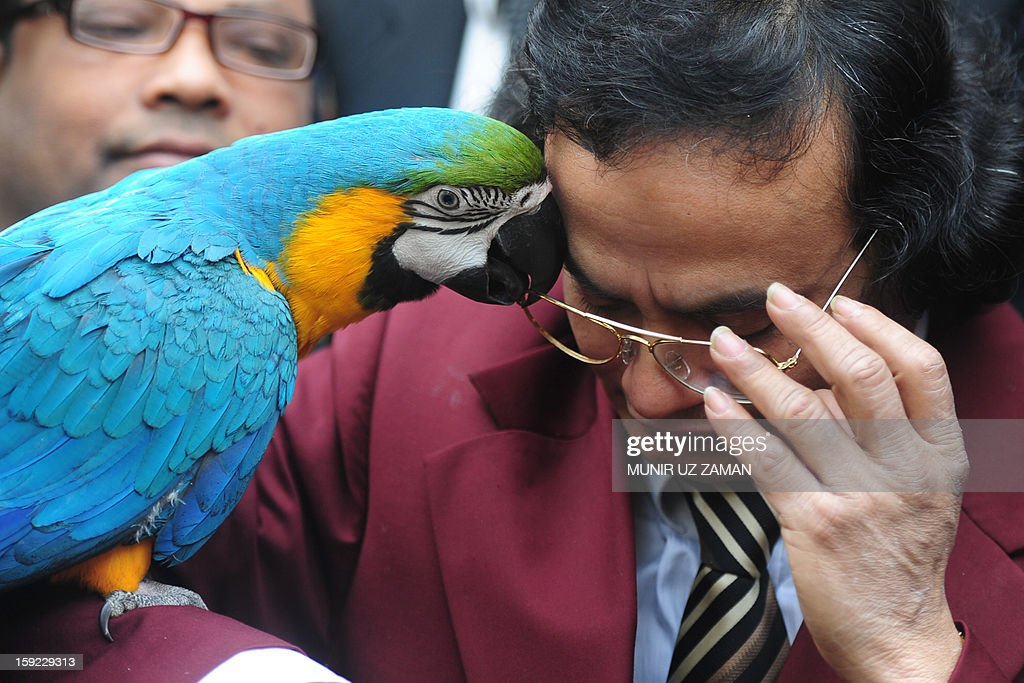 Parrot owner Abdul Wadud poses with Princess the macaw outside a court in Dhaka on January 10, 2013. A Bangladeshi lovesick parrot who has been on a hunger strike after being parted with her male partner was told by a court January 10 it could not reunite the pair due to a dispute between their owners. The macaw parrot named Princess has refused food since January 3 when her long-time companion Prince was returned to his owner Iqram Selim who had left him in the hands of a private zoo in Dhaka for safe keeping five years ago. AFP PHOTO/Munir uz ZAMAN
