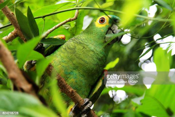 Parrot perching on branch