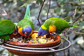 A parrot in wild nature